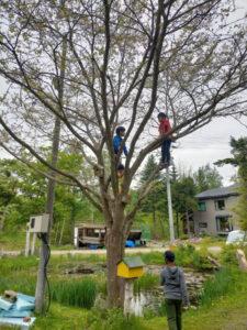 こんな高い木に、登っちゃいます